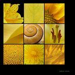 . yellow nature .