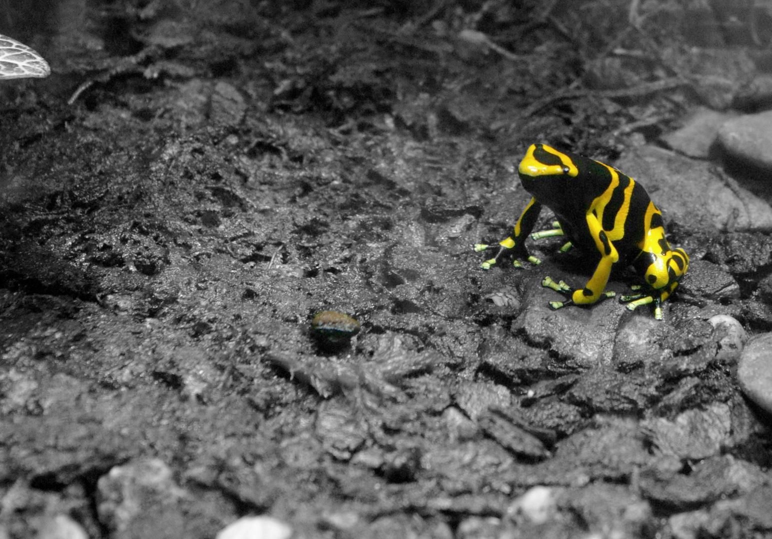 Yellow Neon Frog