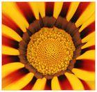 Yellow Radiant