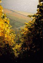 YELLOW - sanftes Gold