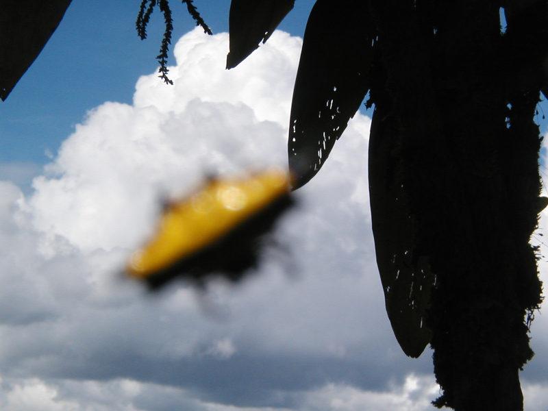 Yellow Submarine ?! ...was ist DAS ?