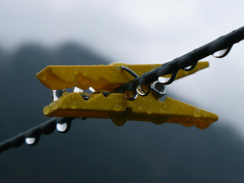 Yellowdrop