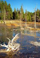 Yellowstone - Feuchtgebiet