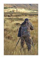 Yellowstone - Jäger und Beute