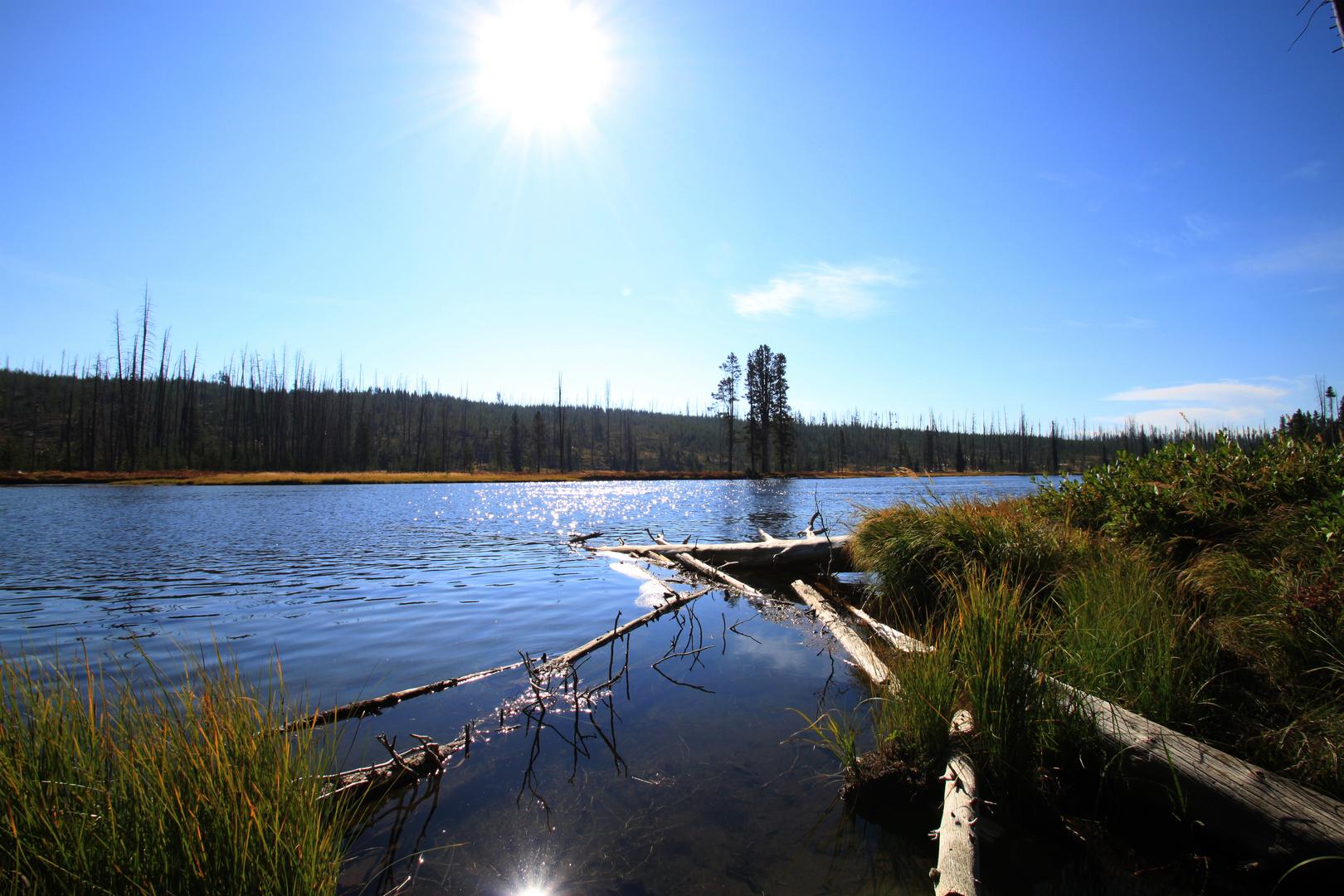 Yellowstone - Snake River