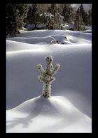 Yellowstone - Winter Wonderland