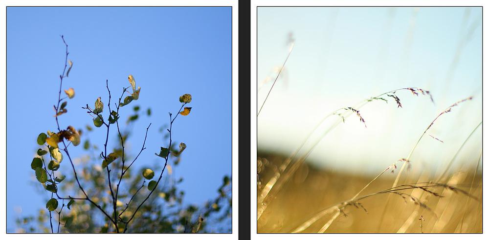 Yesterday i saw the autumn