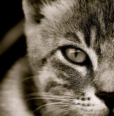 yeux de chat 2