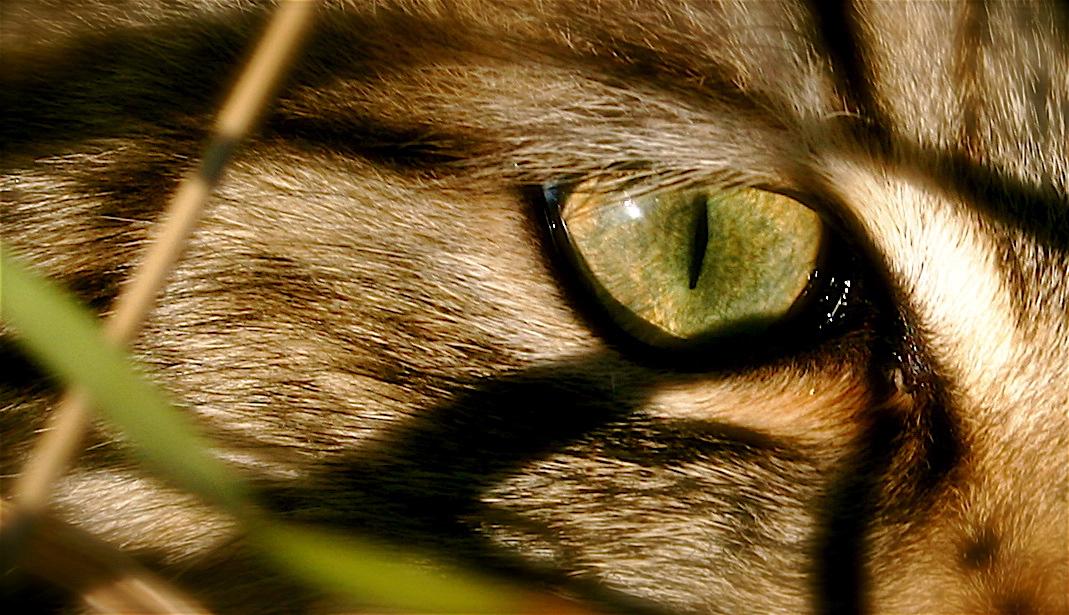 yeux de chat