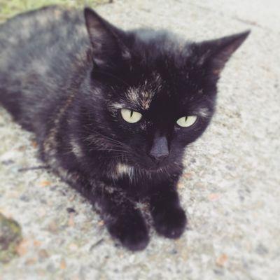 Yeux verts clair d'un chat noir abandoné