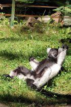 Yoga am Morgen ...