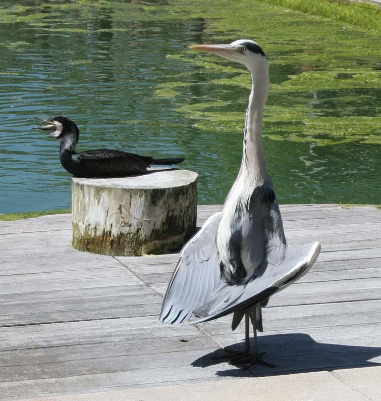 yoga für tiere... ist total in