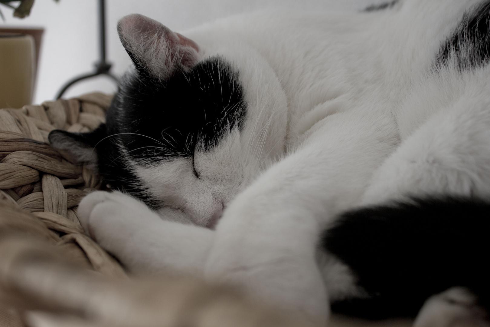 Yoga-Schlaf