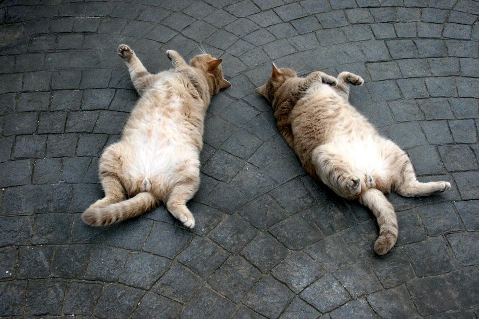 Yoga zu zweit macht viel mehr Spass.... Foto & Bild ...