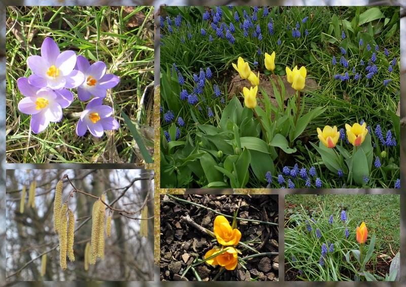 Yopla Boum .... il y a le printemps qui chante !
