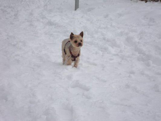 yorkshire des neiges