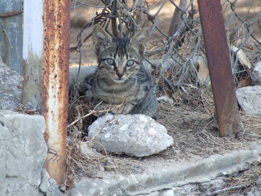 Young cat in the Streets of Holon, IL