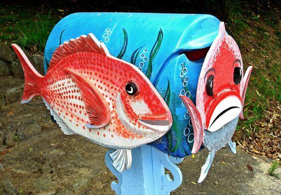 You've got fish....