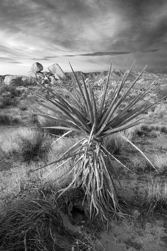 Yucca, granite & stormy sky