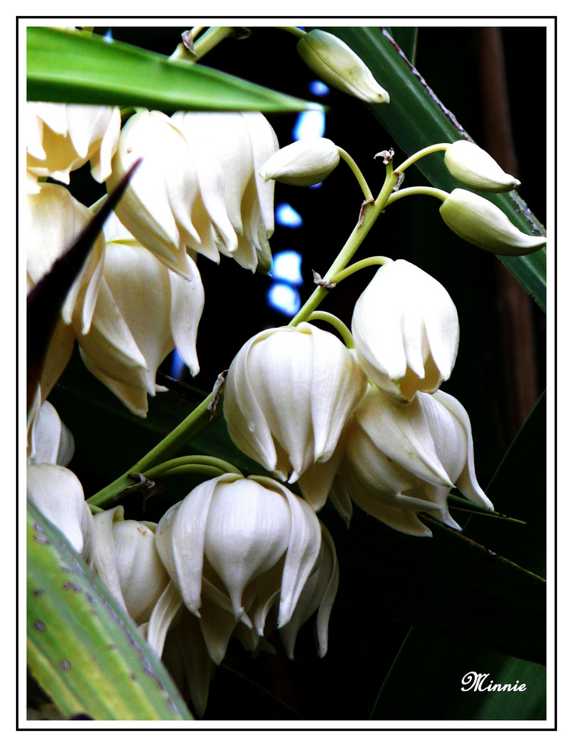 """ Yuka en fleurs ...2 """
