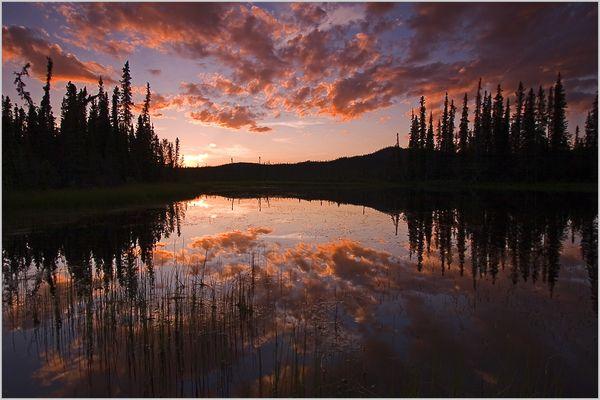 Yukon Nights