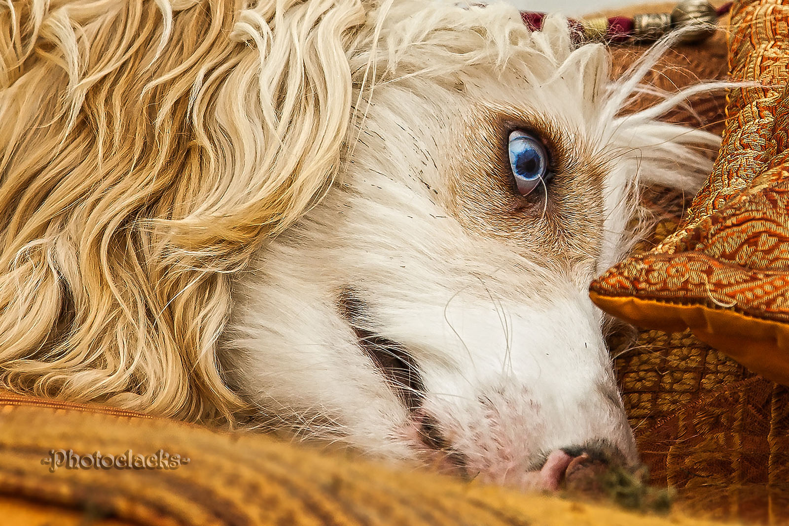 Zack - Auge blau - Wauwau