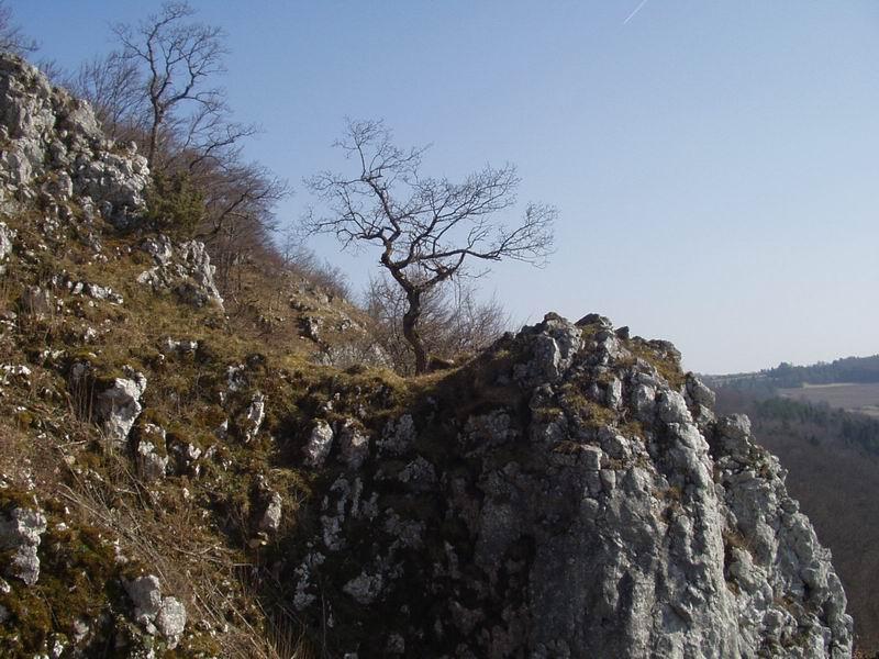 Zäher Baum