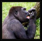 Zähne zeigen !!!!