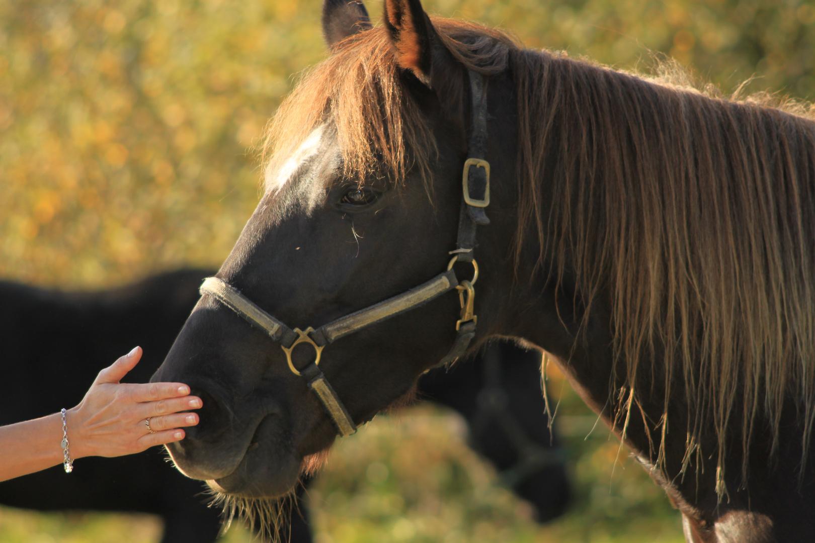 Zärtichkeit mag auch ein Pferd :)