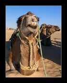 Zahnpastawerbung á la Dromedar ;-)
