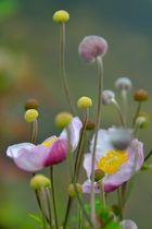 Zart in rosa