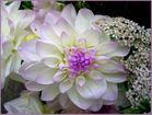 zart lila