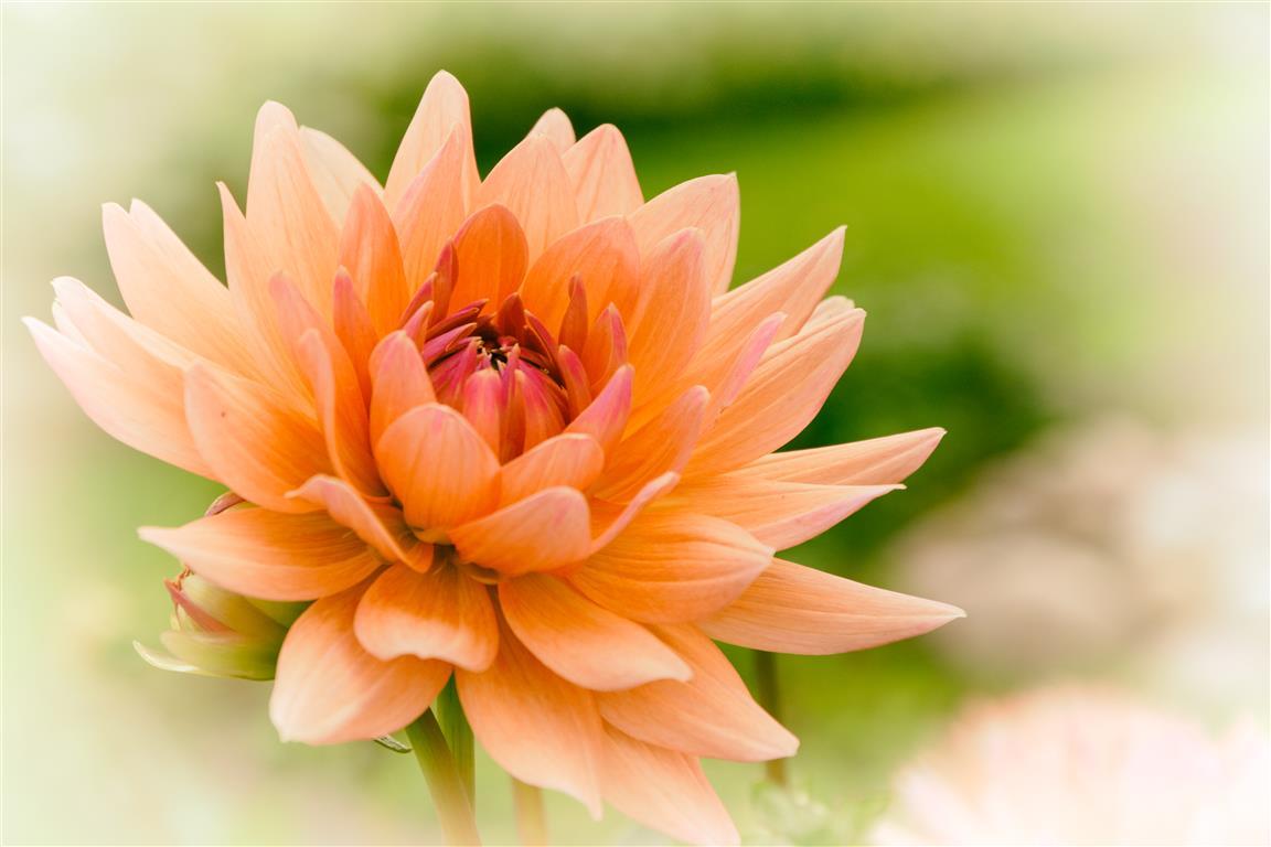 Zart Orange Farben