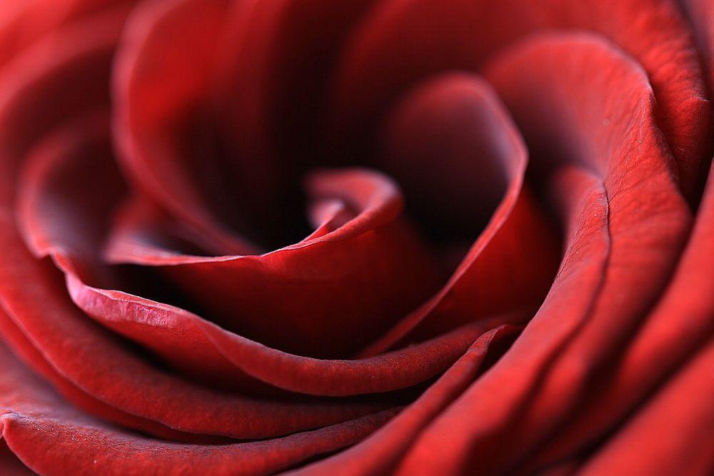 Zart Rot von Patrick Schramek