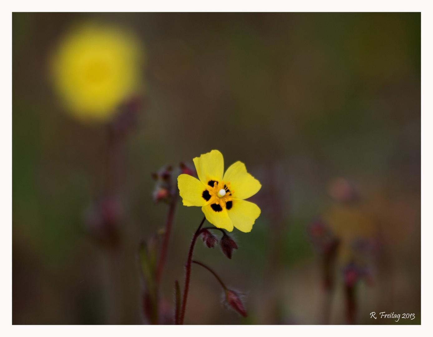 Zart und Gelb