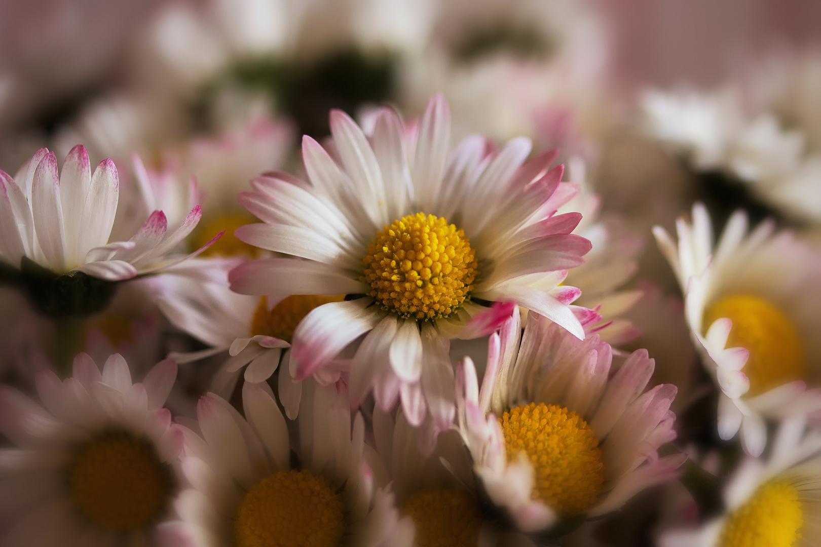 Zart und rosa überhaucht...