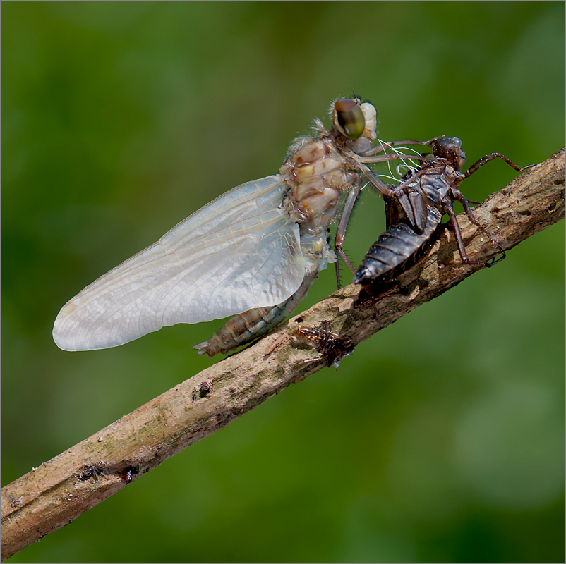 zart und weiß wie engelsflügel