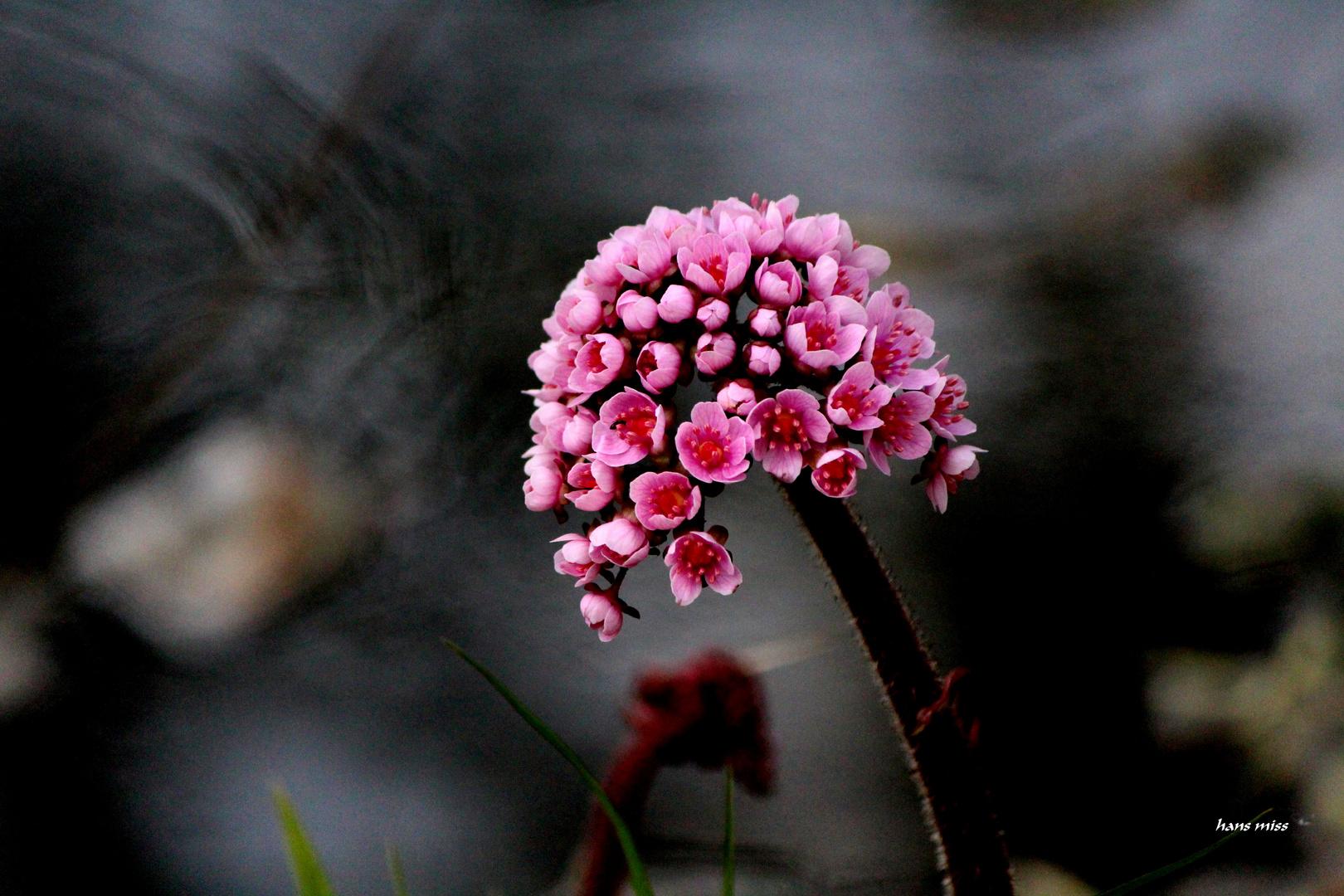 zarte Blüten 2