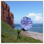 Zarte Blüten ....