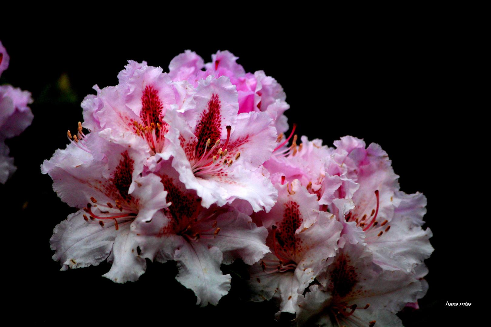 zarte Blüten.
