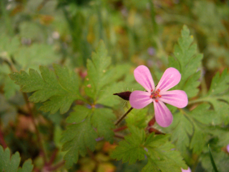 Zarte Blüten am Waldrand 4