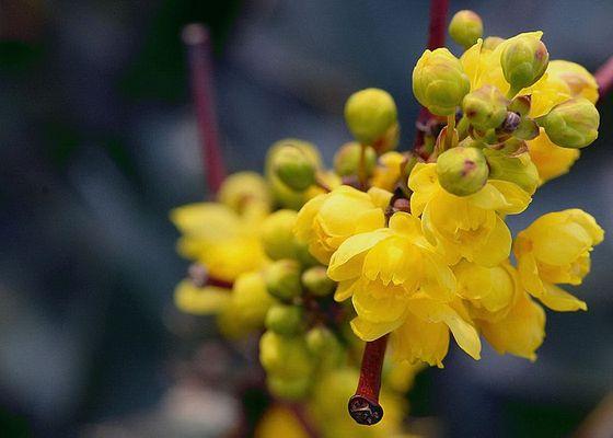 Zarte Blüten....