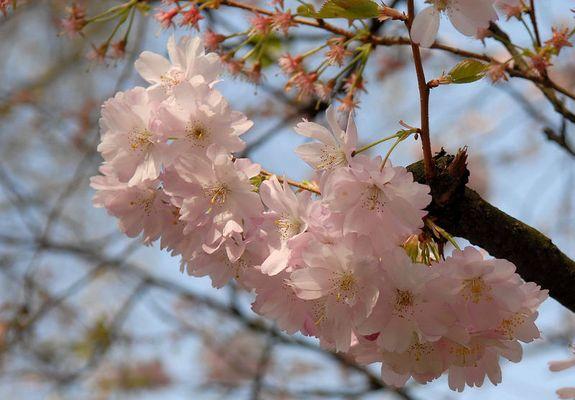 Zarte Blüten in der Frühlingssonne....
