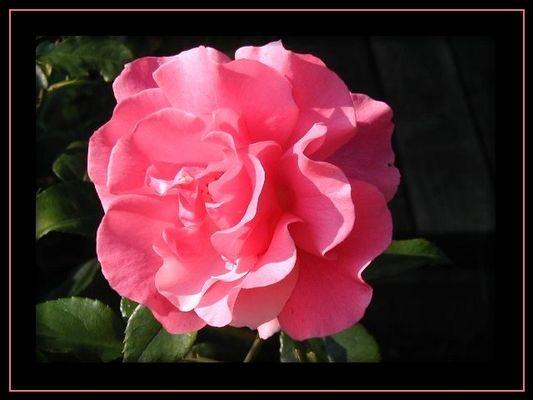 zarte Blütenträume