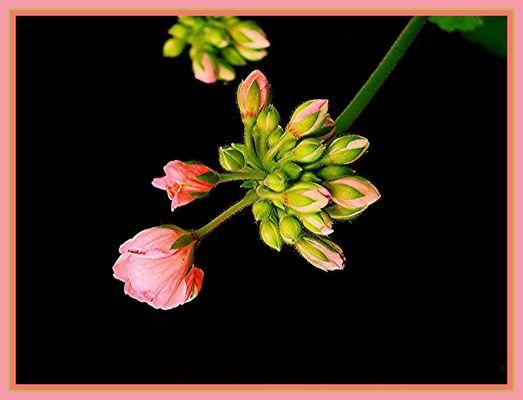 Zarte Blumen