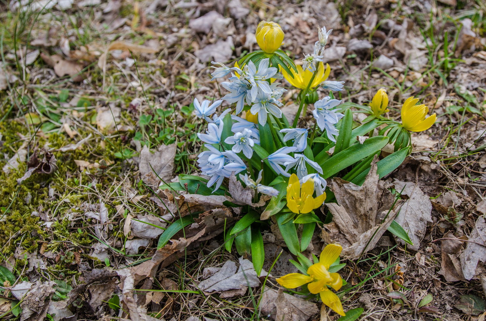 Zarte Farben zum Frühlingsbeginn