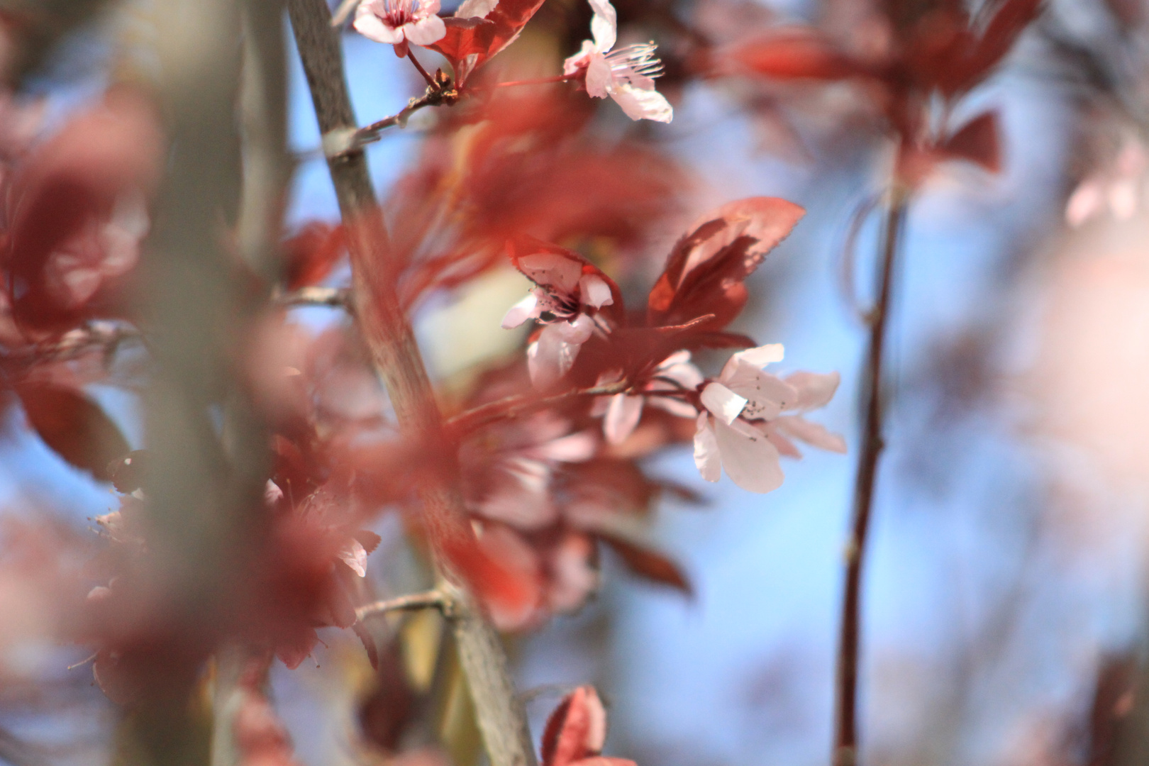 Zarte Frühlingsboten