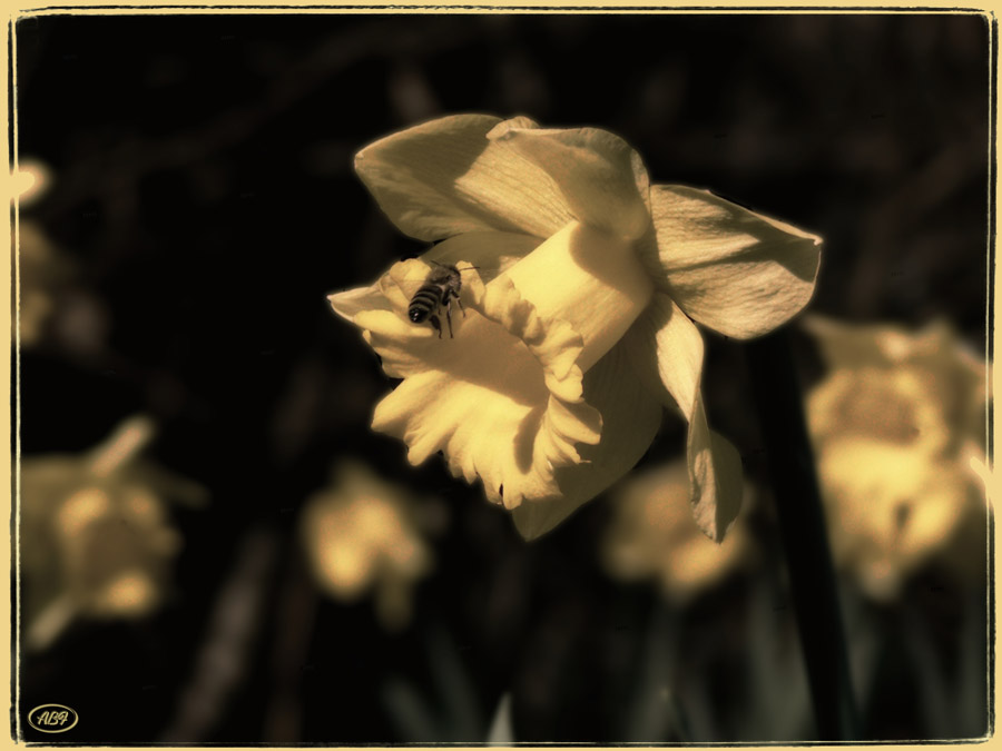 Zarte Gesichter des Frühlings...2