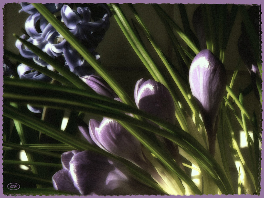 Zarte Gesichter des Frühlings...3