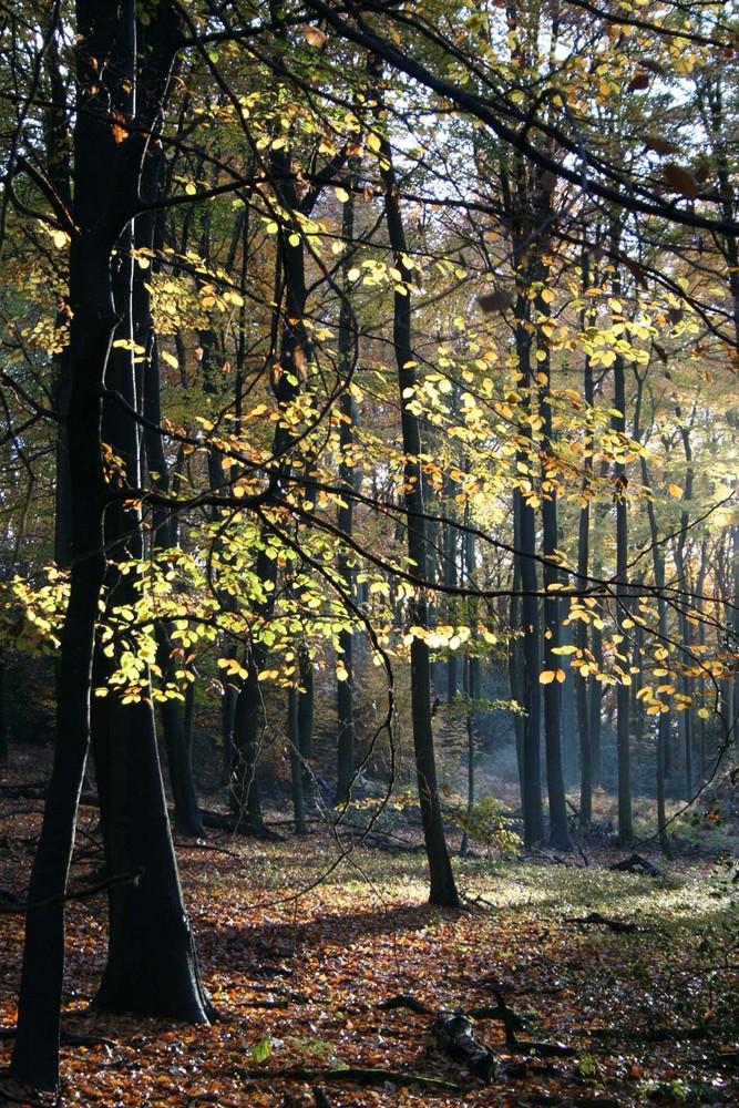 Zarte Herbstsonne